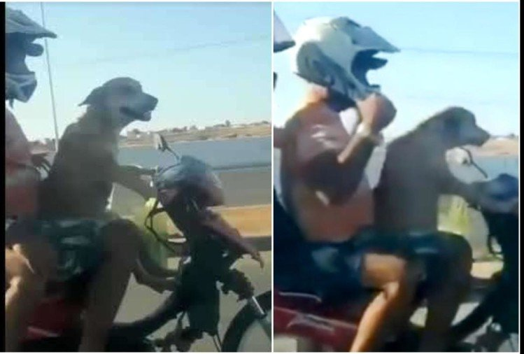 viral video of dog driving a bike with two other pillion riders