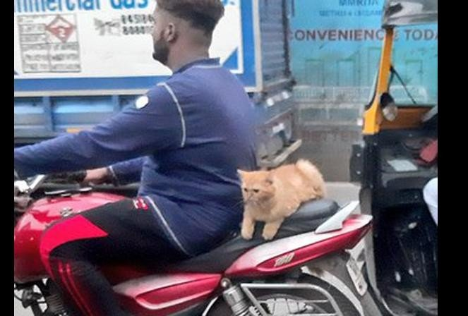 viral photo of cat rides on bike