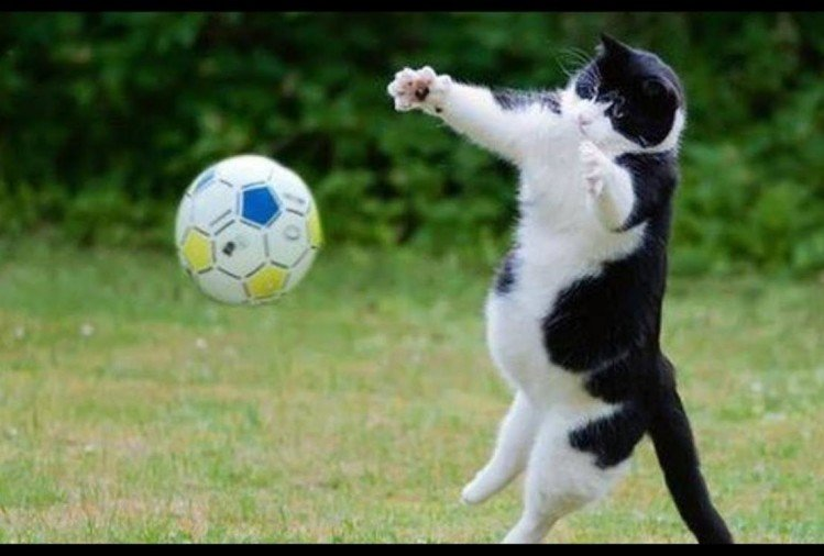 viral video of cat who have awesome goalkeeping skills