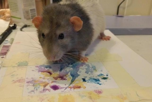 know the story of rat who earned 1,000 Pounds to sell his own paintings