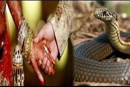 weired ritual where father gift 21 Poissoness snake to his son in law