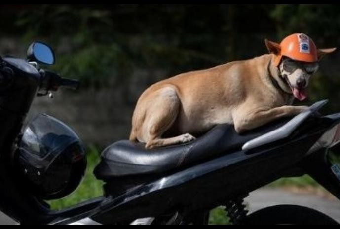 know the story of  Philippine Biker his dog Bogie fan following like celebrity