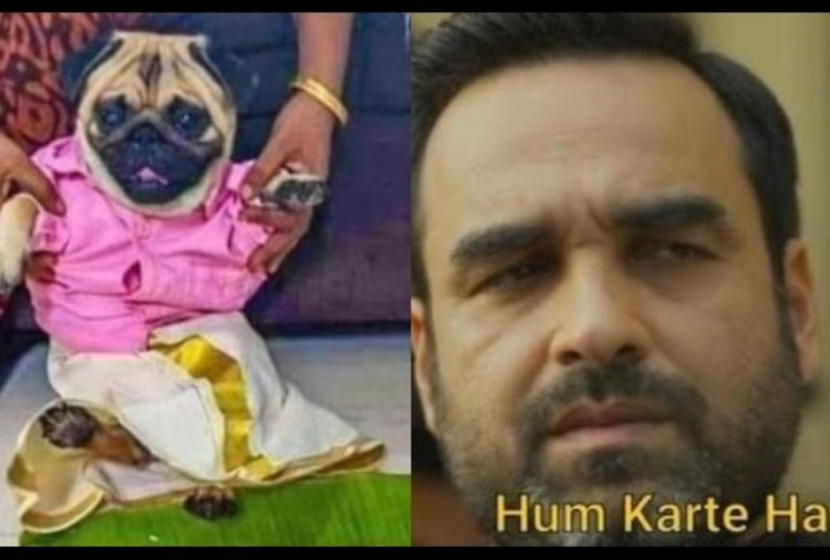 viral image of dog who become groom and owner looking for a perfect match