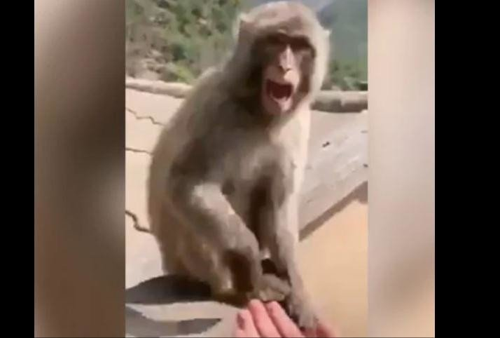viral video of man who come in front of monkey with empty hand animal see and got angry