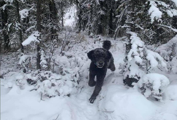 Viral photo optical illusion picture is this man or an animal into snow