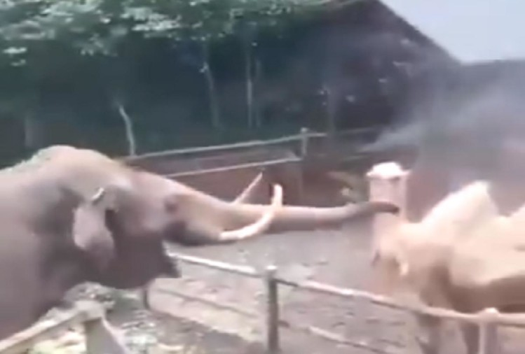Elephant and camel funny video viral on social media