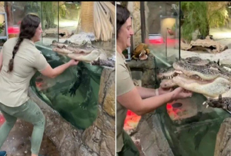 two alligator enjoy chin scratches video is going viral