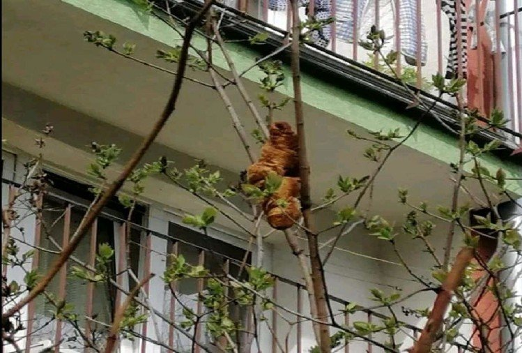 woman finds mysterious headless beast on tree in Krakow Poland