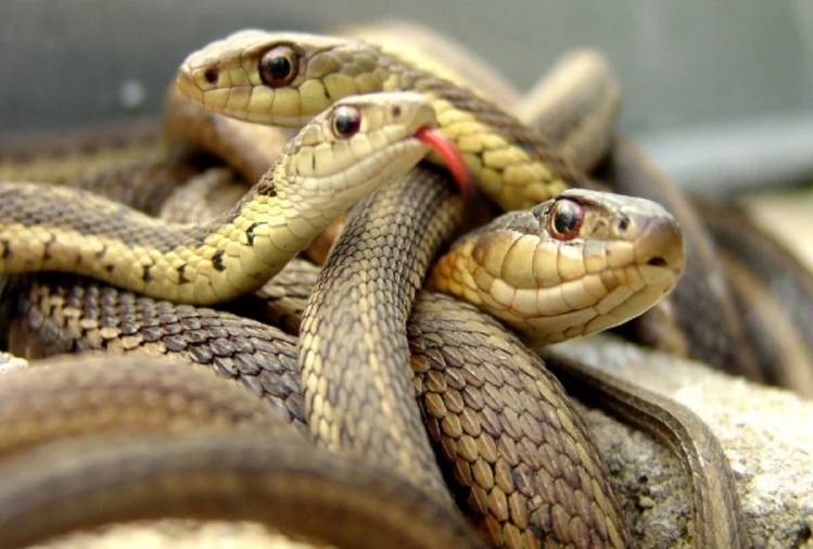 5 most poisonous snake in the world which can kill you quickly