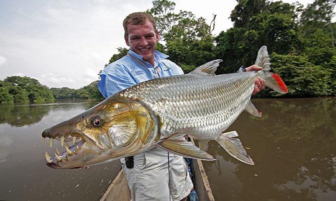 congo-tiger-fish