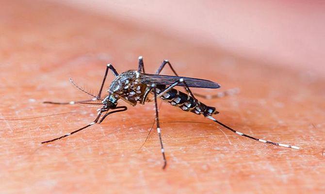 mosquito-bite_5d8ec2b6-2ca4-11e5-a8da-005056b4648e
