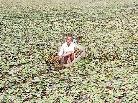 Image result for सिंघाड़े
