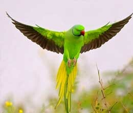 parrots picture help concentrate in studies