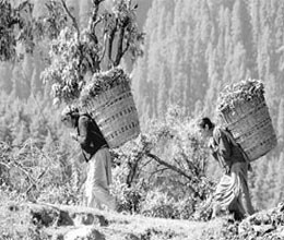 Darjeeling showing path to telangana