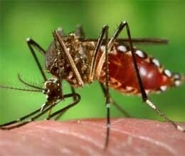 dengue knocks in faizabad not riots