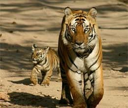 demand for tiger reserve to open up to 20 percent