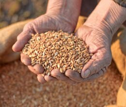 india ranked 66th in terms of food security