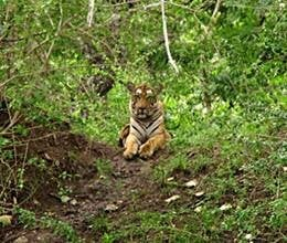 ban on core areas of tiger reserve lifted