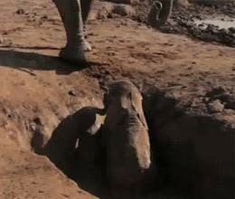 Baby elephant rescued Amboseli Trust trapped well