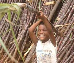 farmers seek higher state advised price for sugarcane