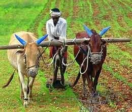 india farm sector performance picks up in recent years phd chamber