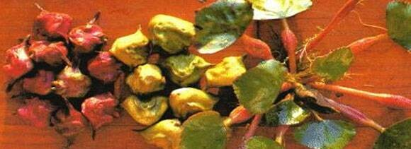 water chestnut benefits in winters