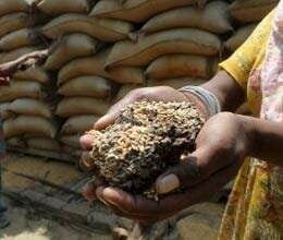 government will made research center to save grains