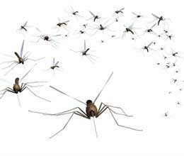 millions of budget of mosquito is not being spent