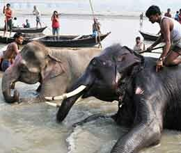 ban on sale of elephant in sonpur fair