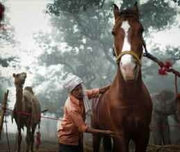 horses increased charm of sonpur mela