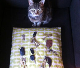 key thief cat caught with keys in her megnetic coller