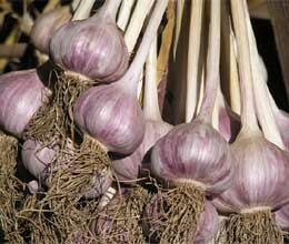 garlic smuggler fugitive from london