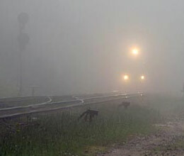 Dense fog hits flights trains affected