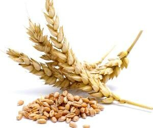 Regional Directorate of Wheat Research Farm in Hisar will